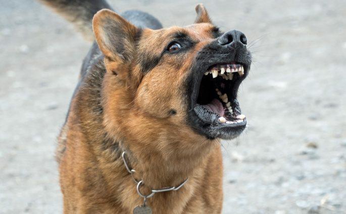 Difendersi da un cane