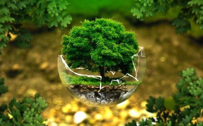 5 giugno 2020 - Giornata mondiale dell'ambiente
