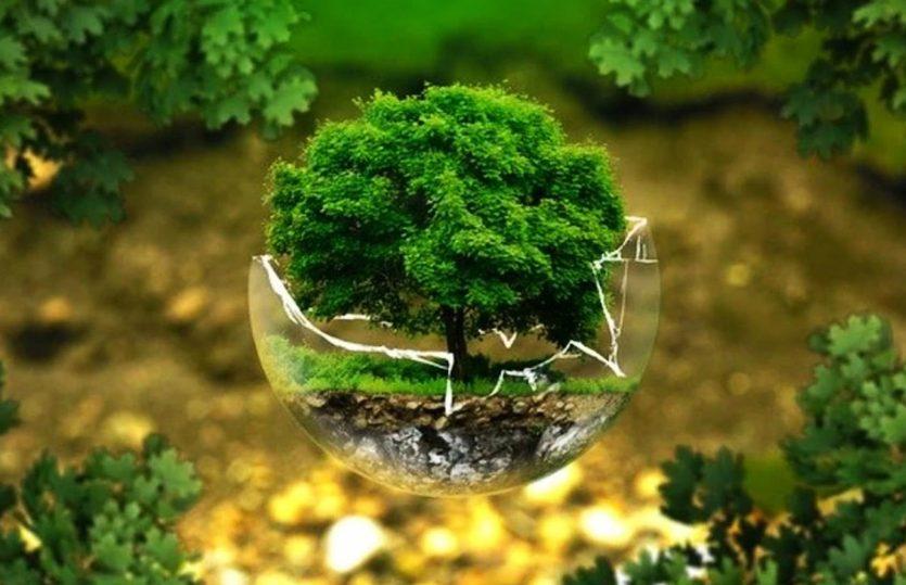 Giornata mondiale dell'ambiente 2020 – Tutte le informazioni
